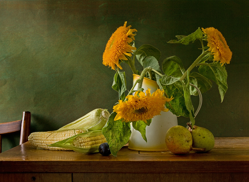 Photograph august by Yulia Pletinka on 500px