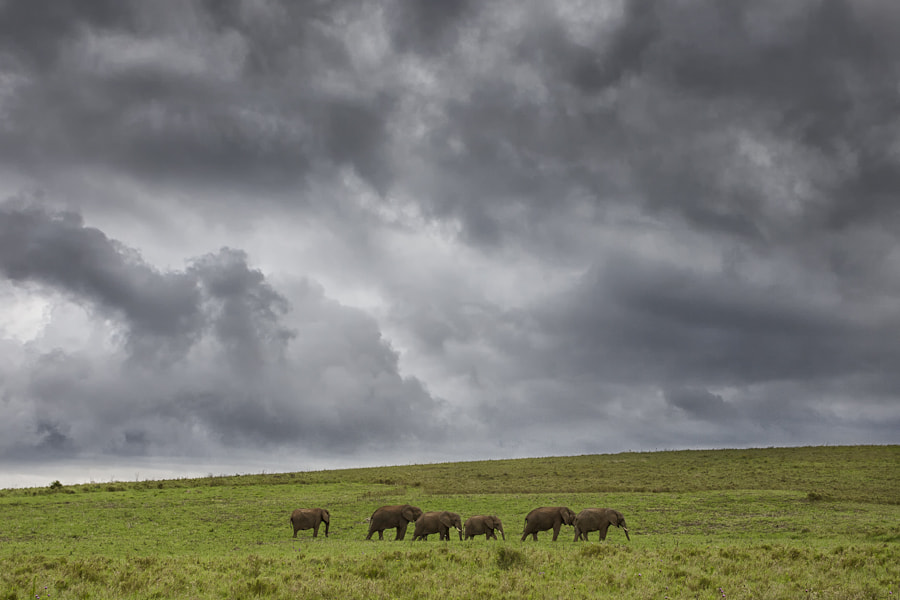 Photograph Addo Plains by Mario Moreno on 500px