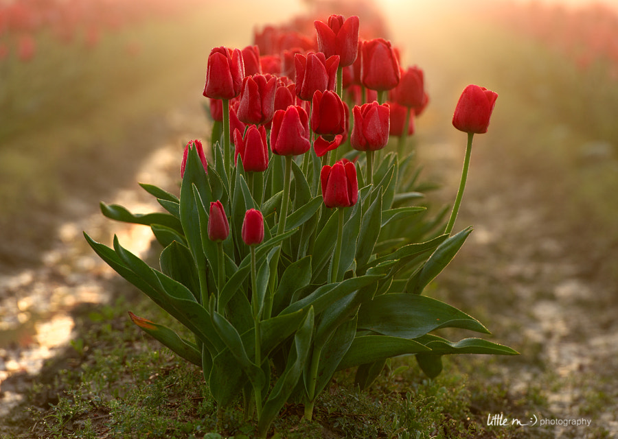My Romance With Red by little m  on 500px.com