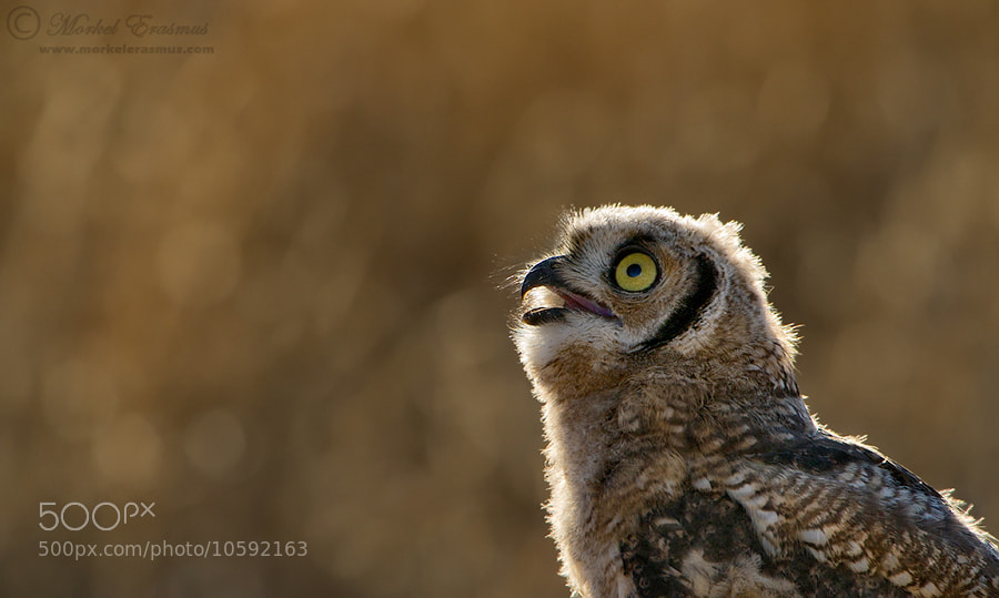 Photograph HOOO goes there? by Morkel Erasmus on 500px