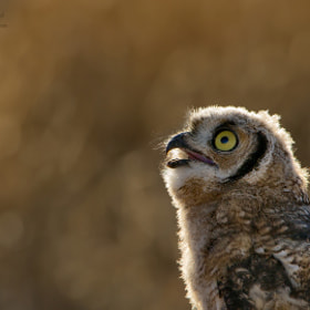 HOOO goes there? by Morkel Erasmus (morkelerasmus)) on 500px.com