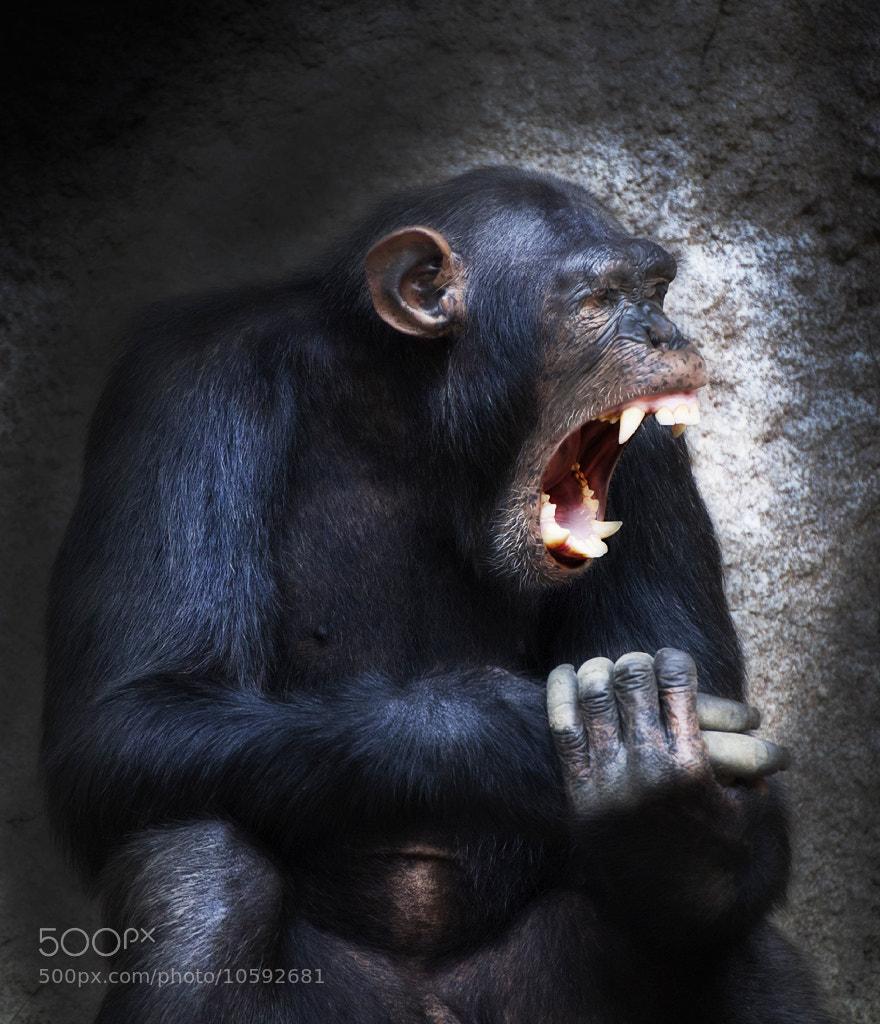 Photograph bawl by Olga Shiropaeva on 500px