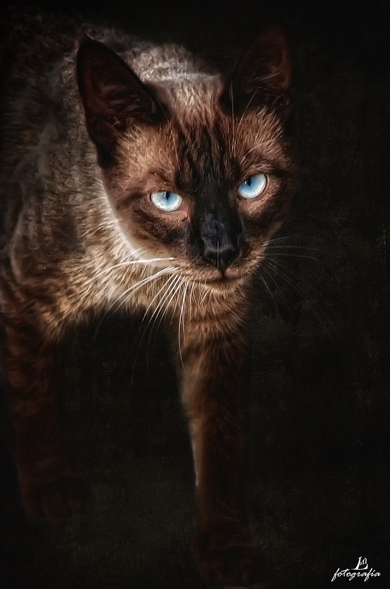 Photograph Felino by Manuel Lancha on 500px