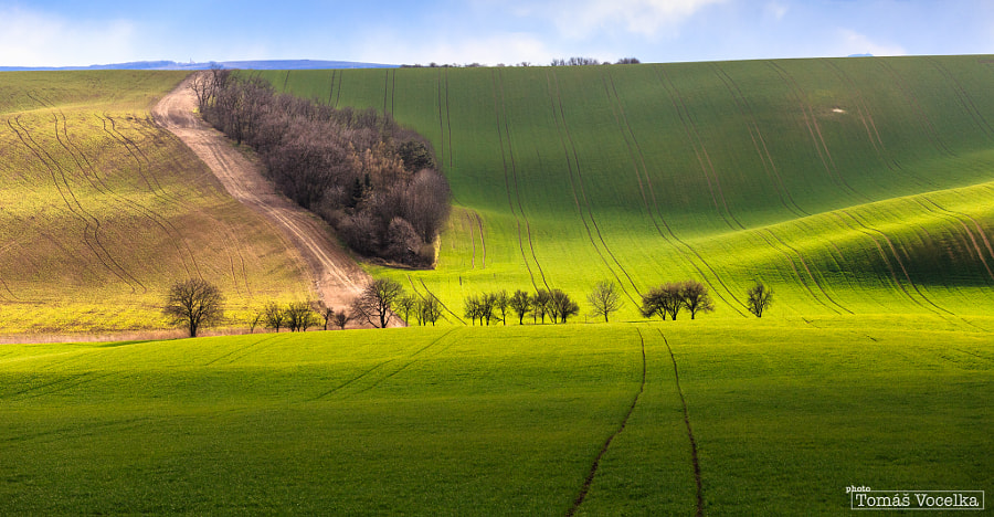 Photograph Early spring by Tomáš Vocelka on 500px