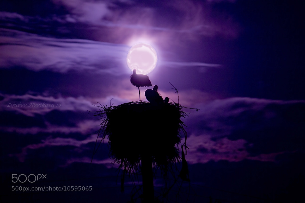 Photograph Night. Moon. Storks. by Lyubov Novikova on 500px