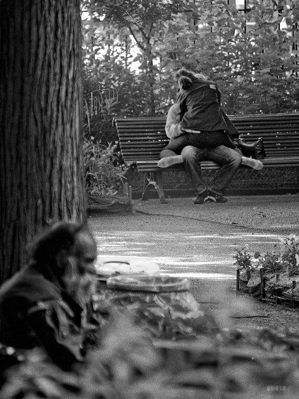 """Many lives in a park, existing in their own way.  <a href=""""http://nightgrain.tumblr.com/"""">Photoblog</a>"""