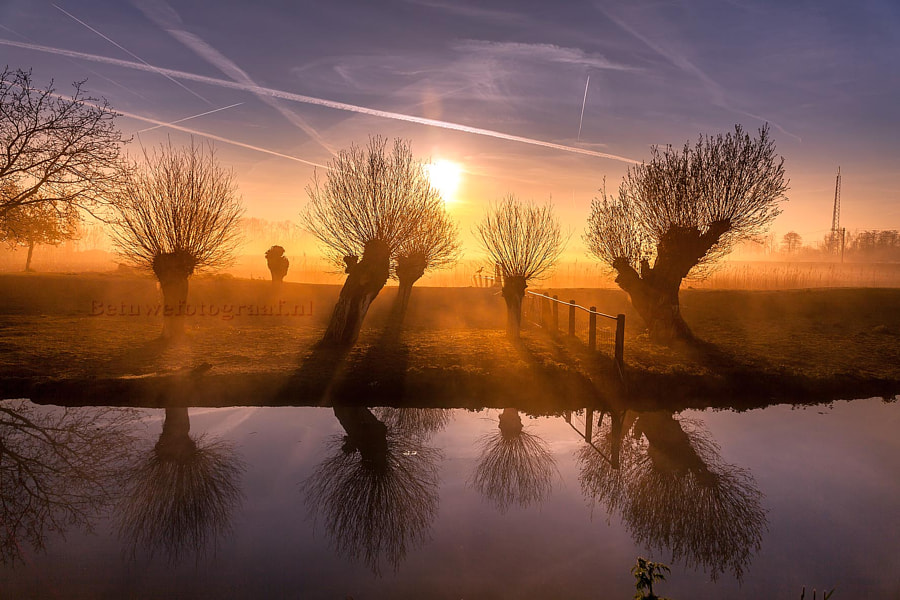 Photograph Foggy Willows....VI by Marinus Keyzer de on 500px