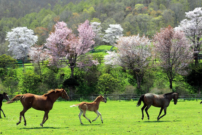 Photograph 春を駆ける by hirosima munetaka on 500px