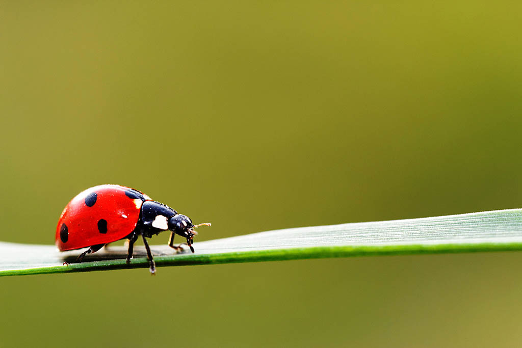 Photograph Ladybug by Jean-Marc Isel on 500px