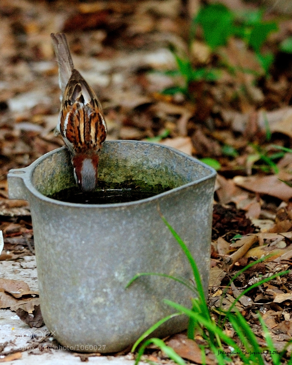 Photograph Grandma's Watering Can by Jay Waggoner on 500px