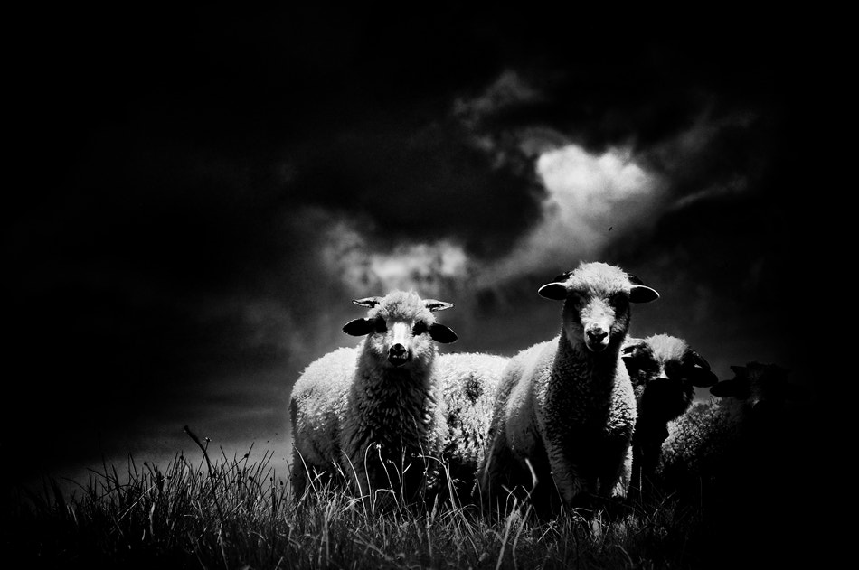 Photograph Family Portrait by Harag Ionut on 500px