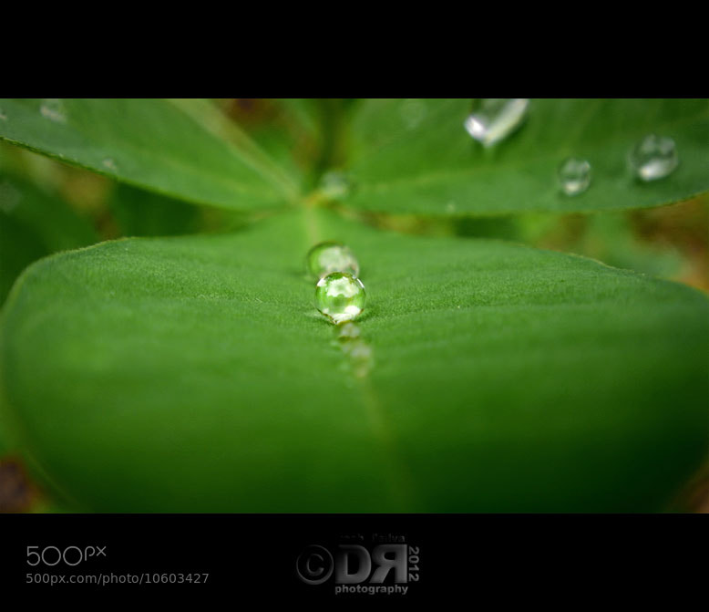 Photograph Crystal ball water drop on a leaf by Dr Roshan D'Silva on 500px