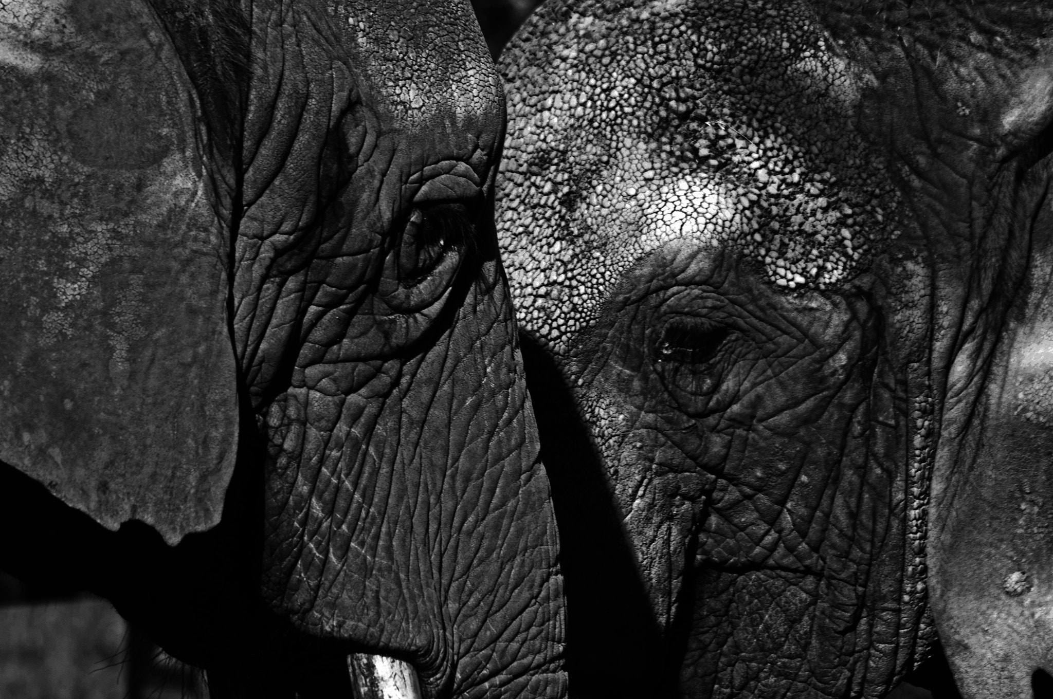 Photograph Everlasting love by Christof Walker on 500px