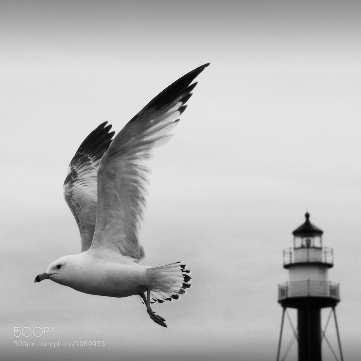 Photograph Come fly away  by Angela King-Jones on 500px