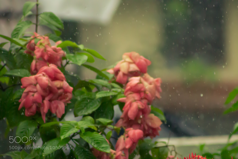 Photograph The rain... by Vishnu Narayanan on 500px