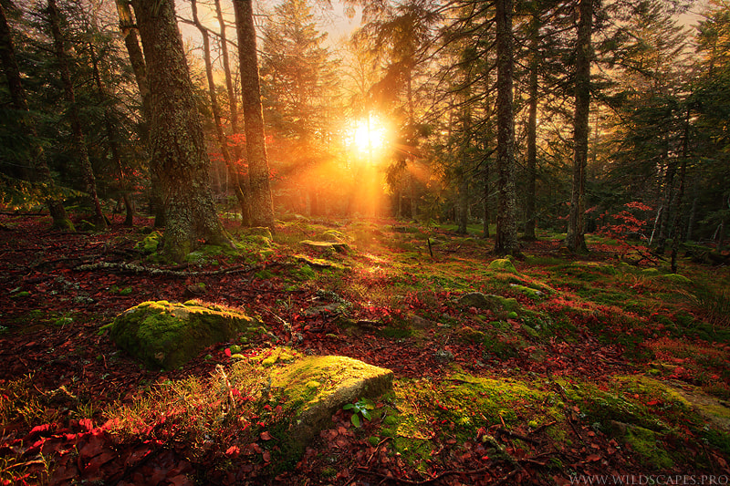 Photograph Woodland Enchantment by Maxime Courty on 500px