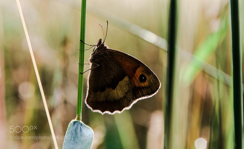 Photograph Butterfly Glow by julian john on 500px