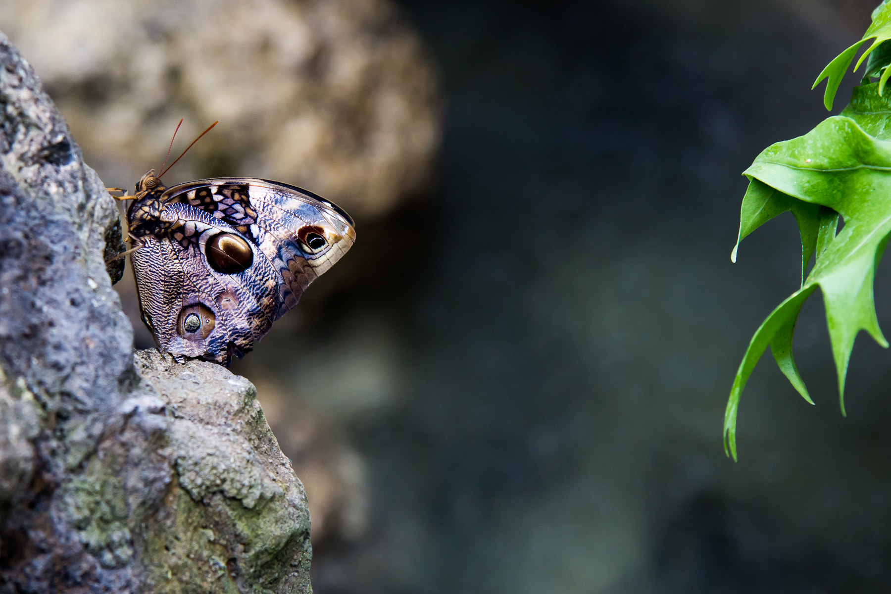 Photograph Sleeping Moth by Alexandre Lahaise on 500px