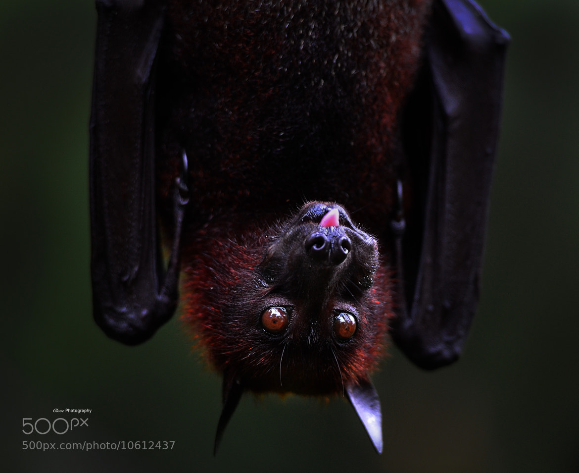 Photograph Bat by MOFs  on 500px