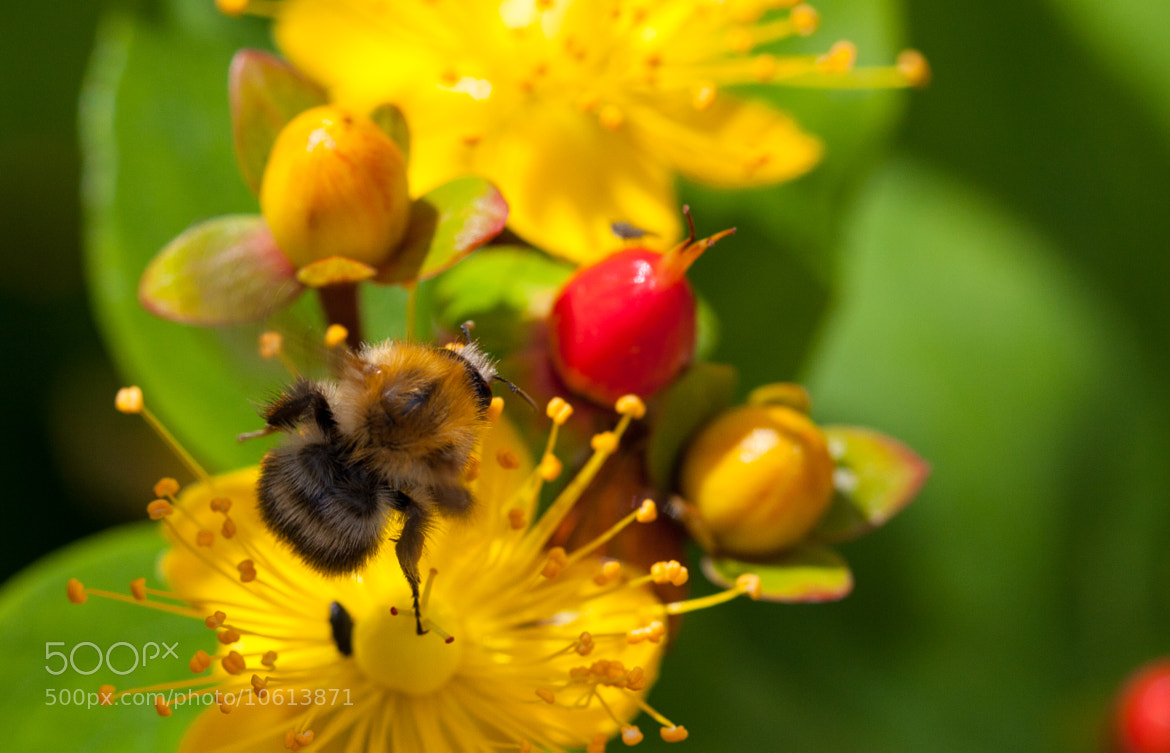 Photograph Bee by Mike Howe on 500px