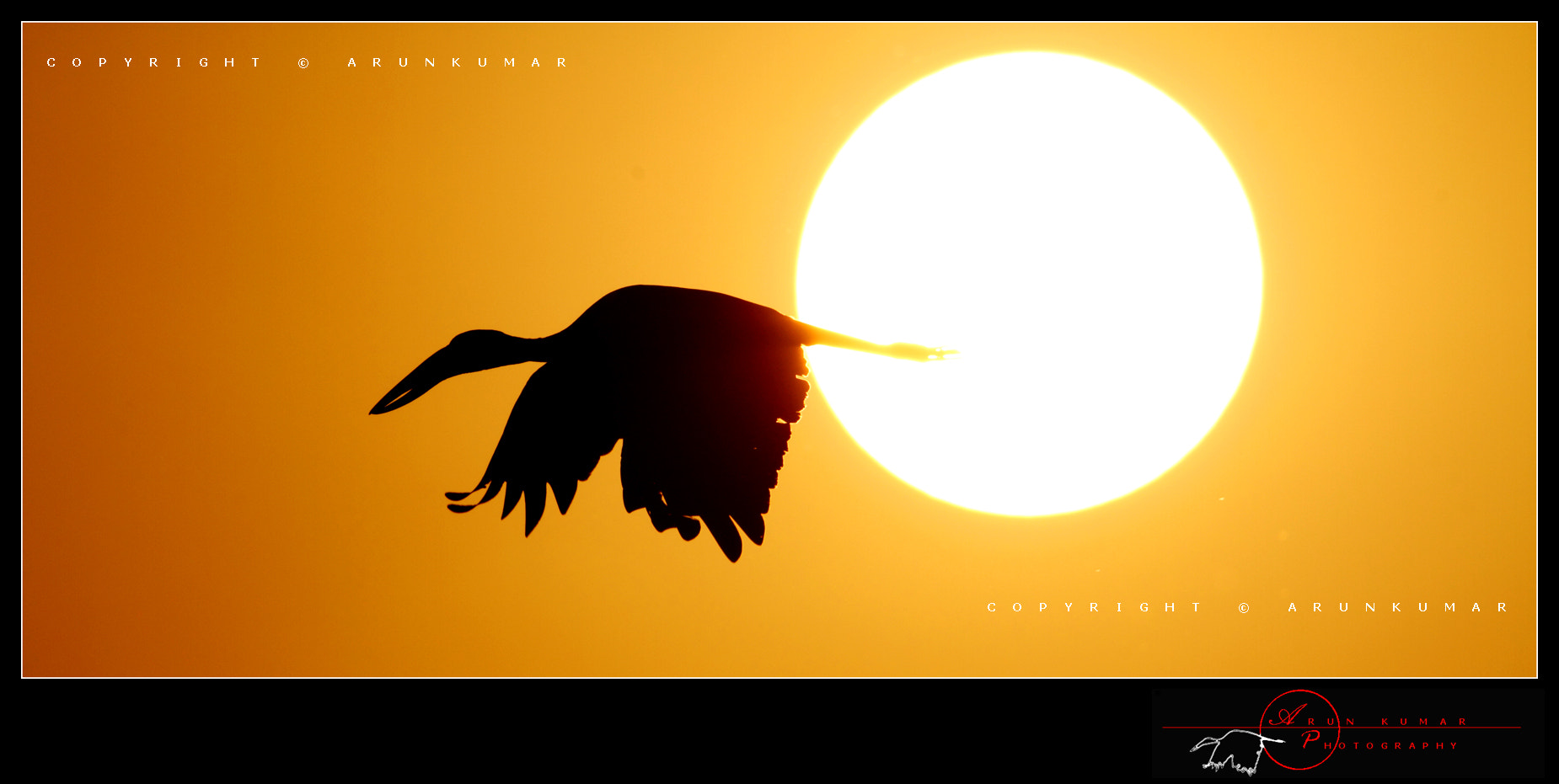 Photograph Openbill stork in flight by Arun Kumar on 500px