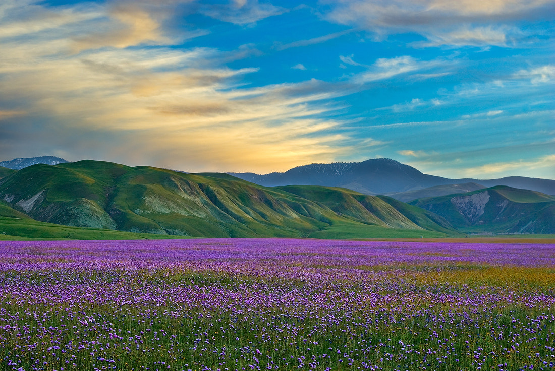 Photograph Spring Peace by Mark Geistweite on 500px
