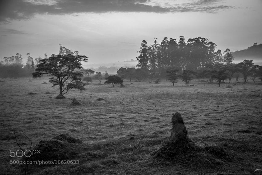 Photograph Kulika Morning by Jim Tanton on 500px
