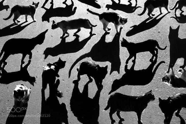 Photograph тени отбрасывают котов by Alexey Menschikov on 500px