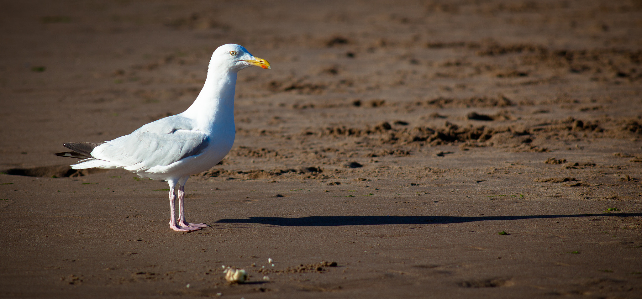 Photograph Seagull by Mike Howe on 500px