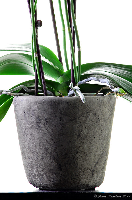 Photograph Pot for Orchids by Janne Kaakinen on 500px
