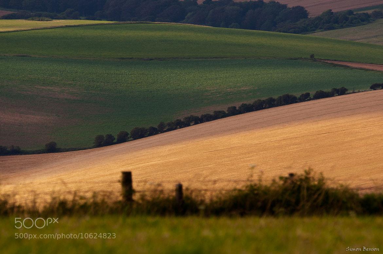 Photograph Golden Field by Simon Benson on 500px
