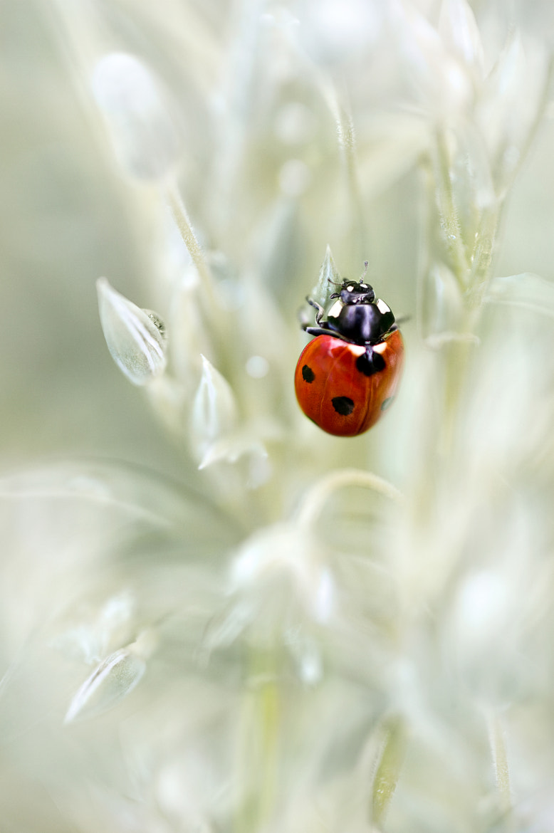 Photograph Ladybird jungle by Mandy Disher on 500px