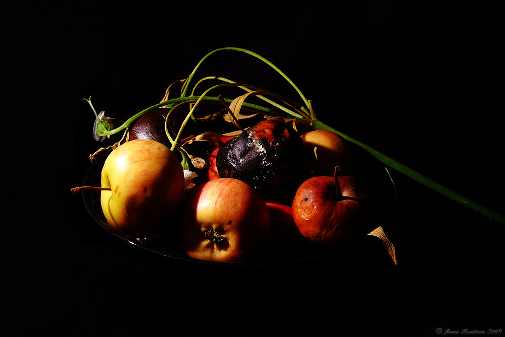 Photograph Rotten Apples 1 by Janne Kaakinen on 500px