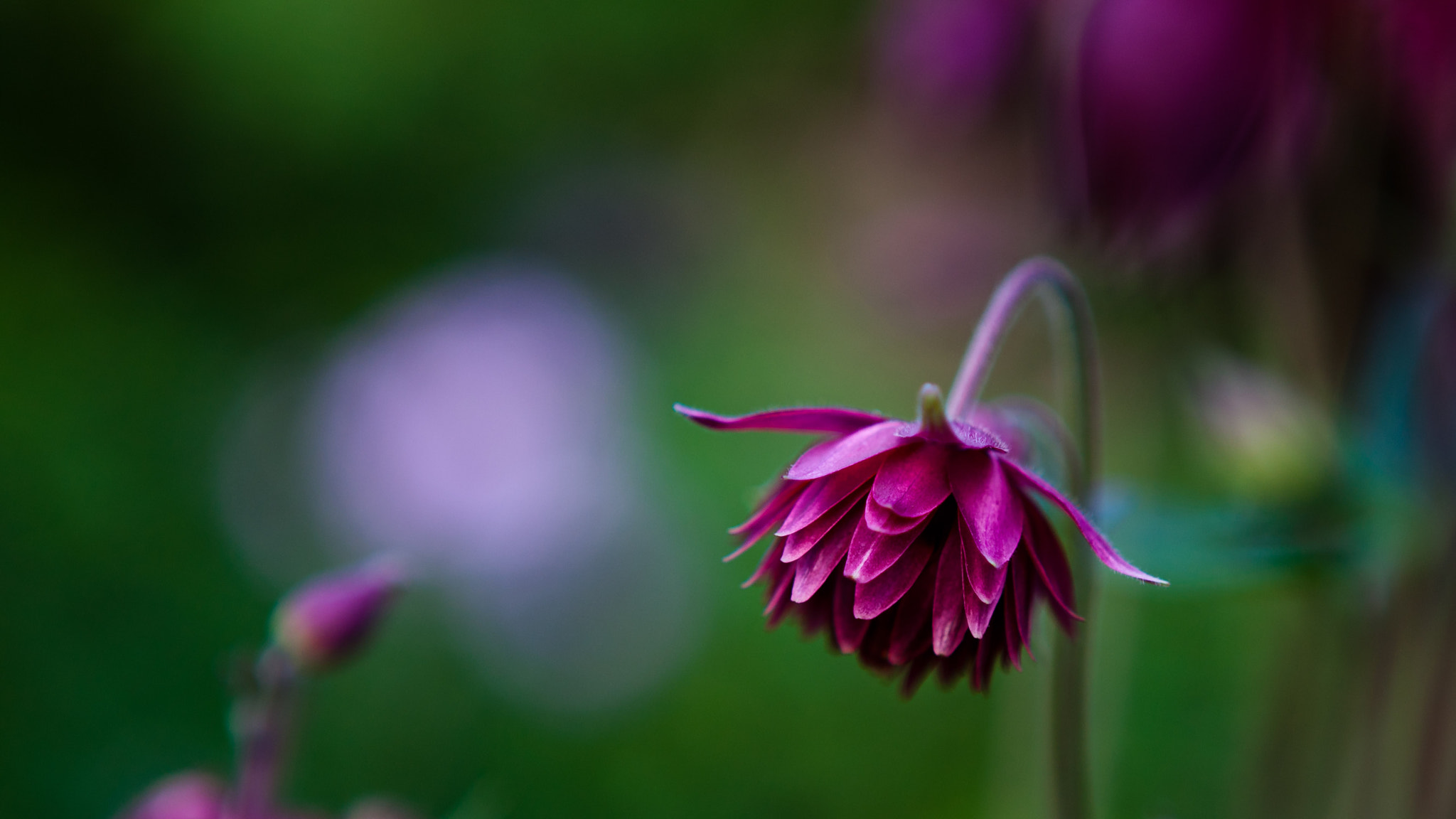 Photograph Columbine by Peter Giger on 500px