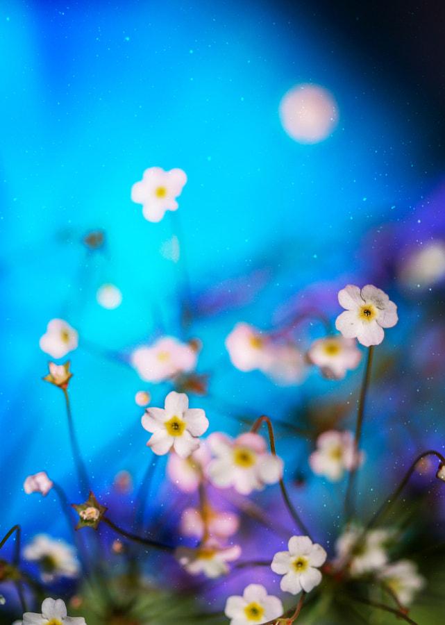 Rêve de printemps