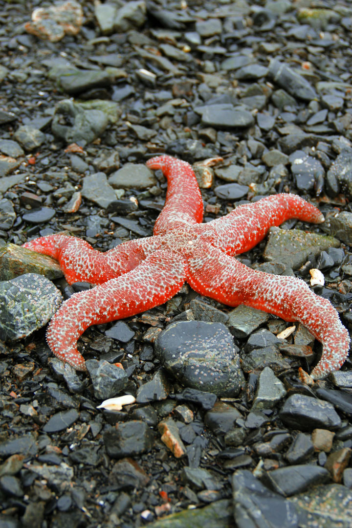 Photograph Starfish on the rocks by Payje Bier on 500px