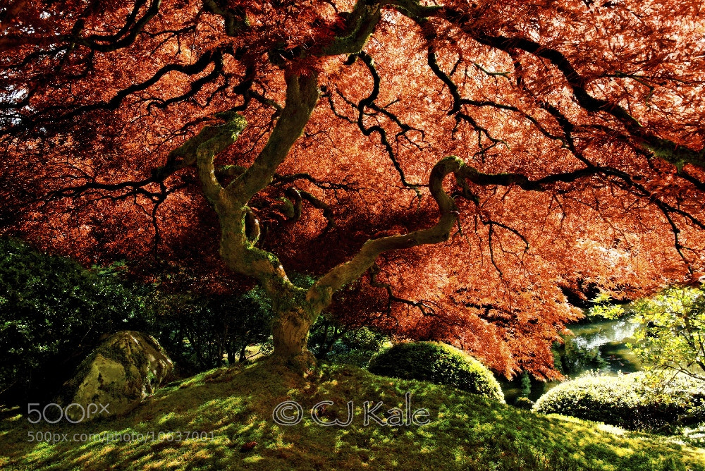 Photograph Tree and Life by Cj Kale on 500px