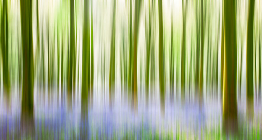 Bluebell Wood by Phil Bird LRPS CPAGB on 500px.com