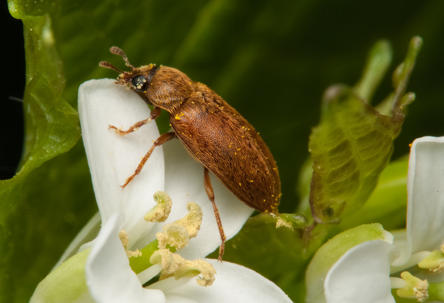 Photograph beetle by Charlotte Fabian on 500px