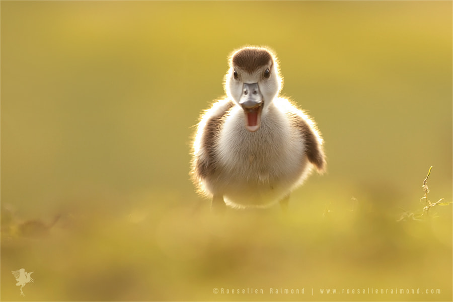 You Said What?! by Roeselien Raimond on 500px.com