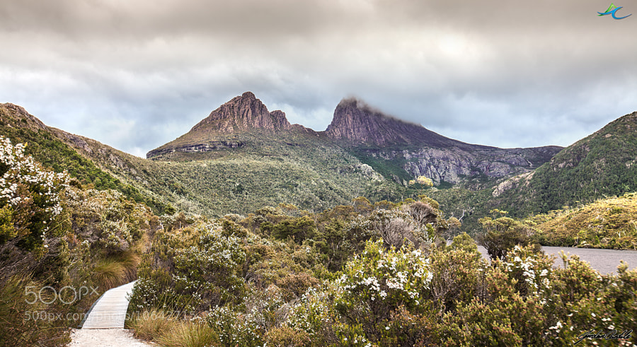 Cradle Mountain is located in the Cradle Mountain-Lake St Clair National Park, Tasmania, Australia. Stands at just over 1500m high it stands high above the surrounding alpine areas of the National Park.