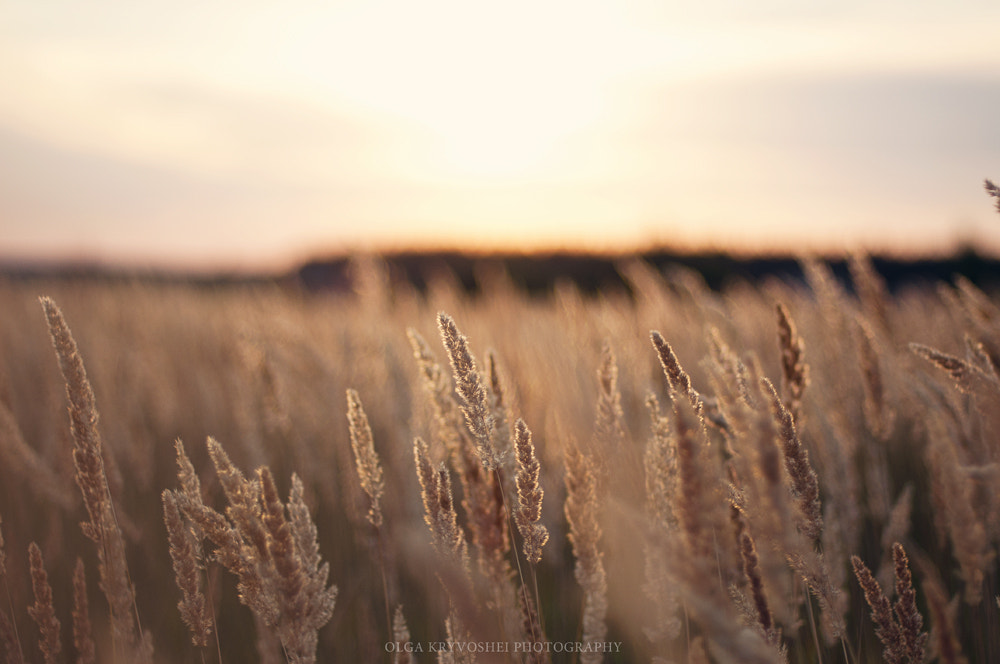 Photograph thoughts of my summer by Olga  Kryvoshei on 500px