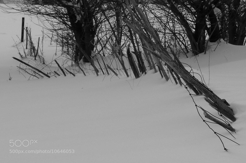 Photograph Fence by Martin Zeinelov on 500px