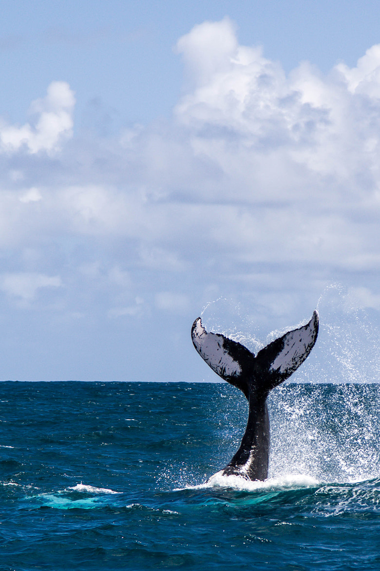 Photograph Whale by Vadik Deep on 500px