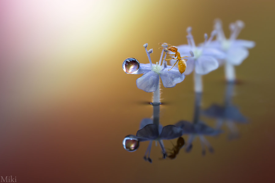 Two Jewels by Miki Asai