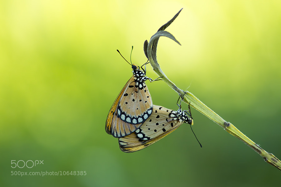 Photograph ButterFly by Aries Setiawan on 500px