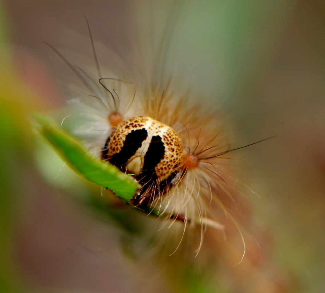 Photograph hairy catterpillar by Mark Barnett on 500px
