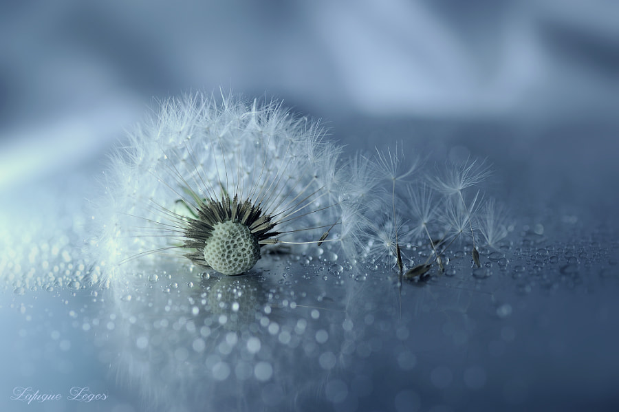 Photograph Ephemeral madrigal by Lafugue Logos   on 500px