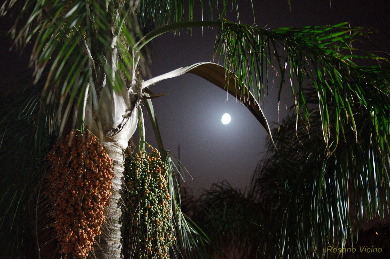 Photograph Moon by Rosario Vicino on 500px