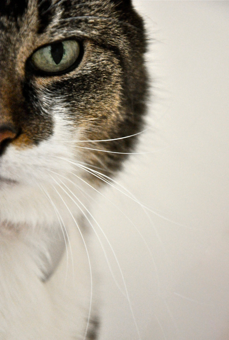 Photograph whiskers by Mark Barnett on 500px